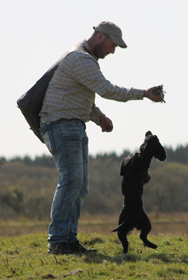 Heolybwlch Gundogs. Champion Cocker Spaniel training and breeding