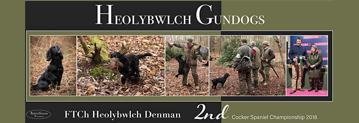 2018 Second Place Cocker Spaniel Championship Heolybwlch Denman